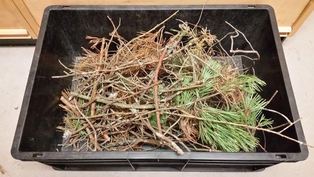 Låda med överblivna delar av kvistar